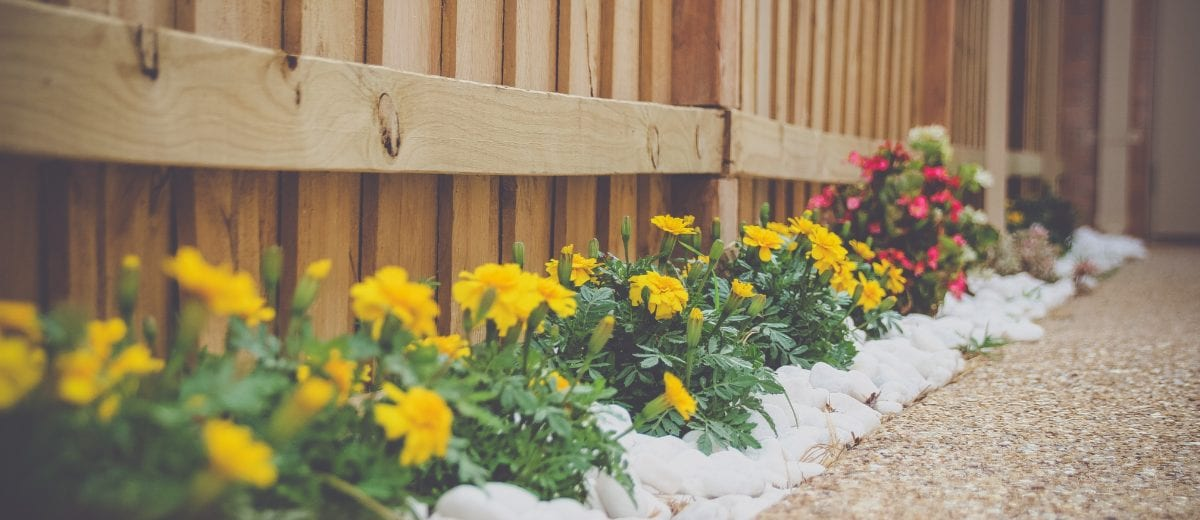 photo of flowers planted along wooden fence